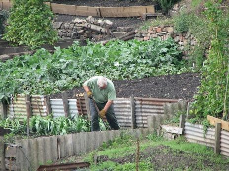 Man working in his allotment